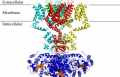 Structure of an ion channel (MacKinnon group)